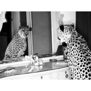 Cheetah Looking In Mirror 120×180