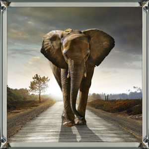 Elephant Walking In A Road 100×100