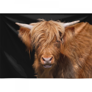Scottish Highland Cattle, Without Mounting Kit ( Velvet )